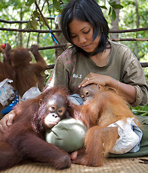 Orangutan Diary on Wisconsin Public Televisioin