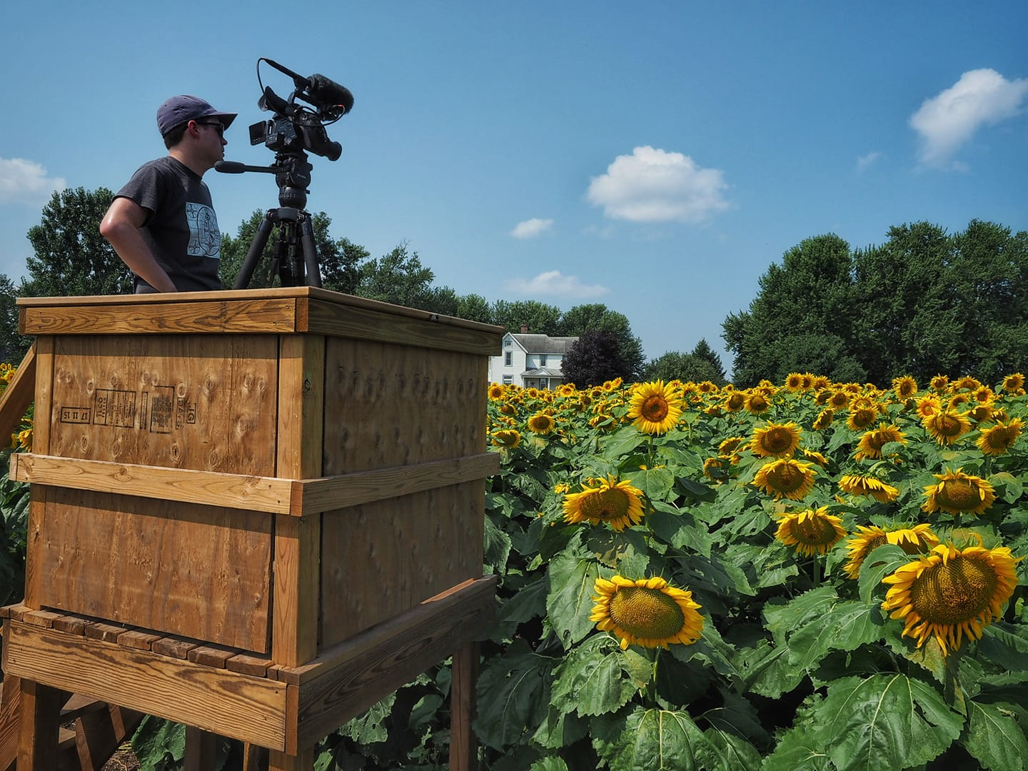 Ryan Ward films a Wisconsin Life story from an observation tower in the middle of a rural sunflower field