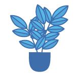 Add office plants