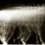 UW Cinematheque's adventures in 3-D