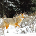 Putting an End to Wildlife Killing Contests