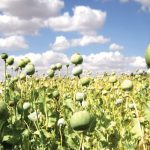 Afghanistan and the Global History of Drugs and Diplomacy