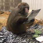 Monkey Time Live, Read All About It!!