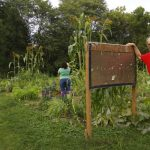 The Way We Eat: Madison's Community Gardens