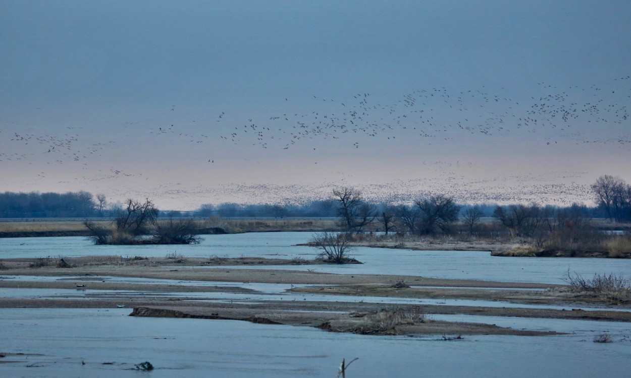 Sandhill cranes on the Platte River landing